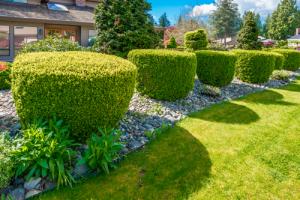 Création et entretien d'un jardin